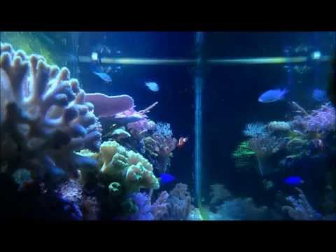 The hardware, build costs, and maintenance of my 100g mixed reef tank.