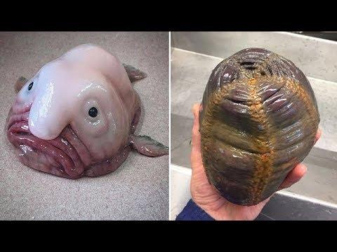 Russian Fisherman Weird Fish 7