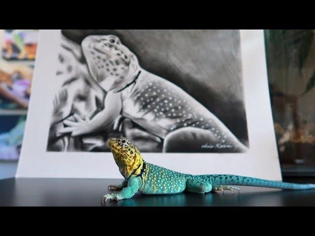 COLLARED LIZARD ART TIME LAPSE!!
