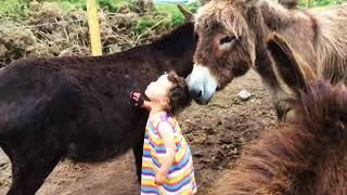 Donkey Whisperer