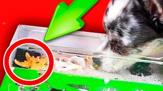 БУНТ МУРАВЬЕВ ! Собака залезла к муравьям! Первая реакция щенка на формикарий Magic Family