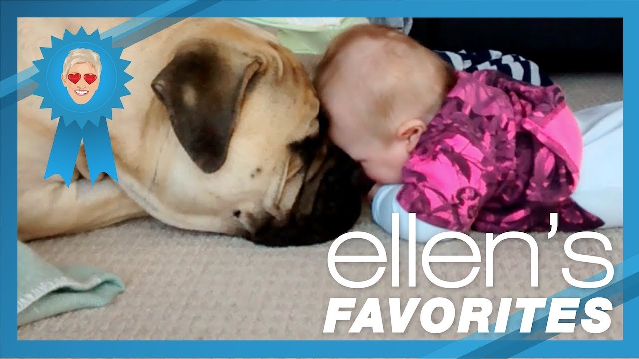 Ellen's Favorite Puppy Love Videos