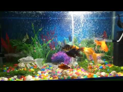 My lovely aquarium