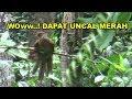 Mikat Burung Kutilang Emas Malah Dapat Burung Uncal Merah Gratis(.mp3 .mp4) Mp3 - Mp4 Download