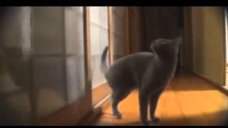 смешные кошки7