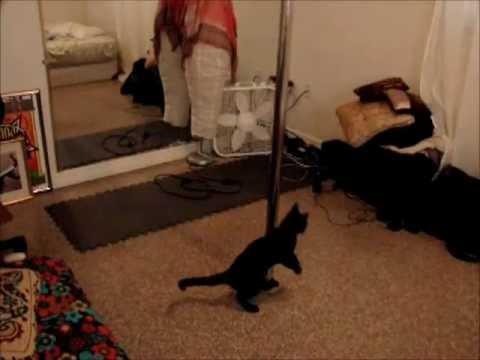 Funny Cat Pole Dance