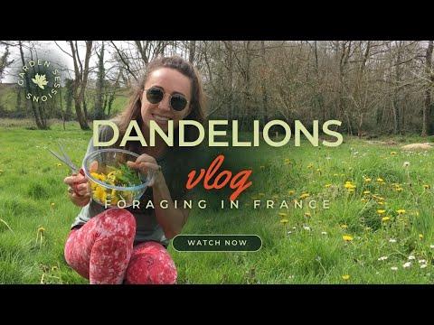 Download Having a crack at harvesting wild French dandelions [Virus Lockdown Ep 2]