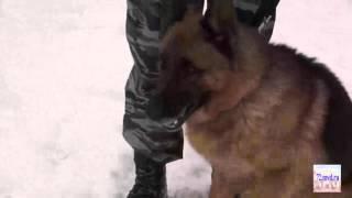 Служебная собака поймала вора в Тюмени