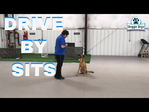 Stop Your Dog From Jumping with Drive By Sits Game - #MinWinDog