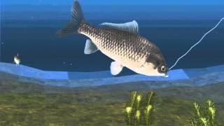 Carp, Carp, Magikarp - Reel Fishing II Part 1