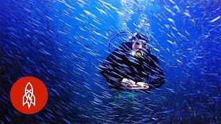 Oceanic Trouble? Summon These Aquanauts! | That's Amazing