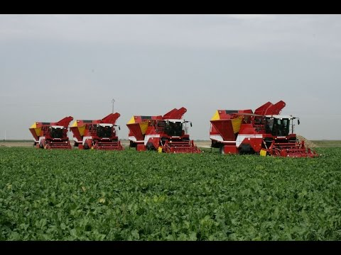 Beet Harvest XXL | 4x GRIMME MAXTRON 620 | self-propelled Beet Harvesters