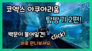 코엑스 아쿠아리움 탐방기2편