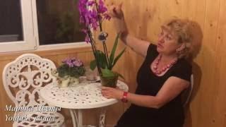 видео Как заставить орхидею цвести. Если орхидея не цветет. Мой многолетний опыт. Комнатные цветы