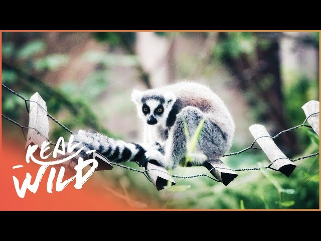 A Battle With Some Baby Faced Baddies!| Zoo Days | Real Wild
