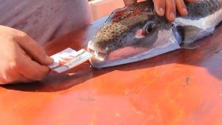 Животные на рыбалке, приколы!