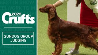 Gundog Group Judging | Crufts 2020