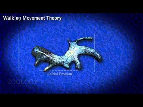 zoology investigatory project