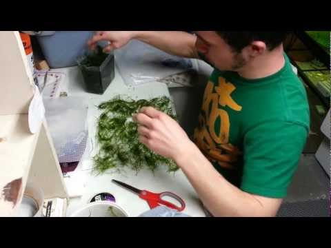 1. DIY Java Moss Wall or Carpet