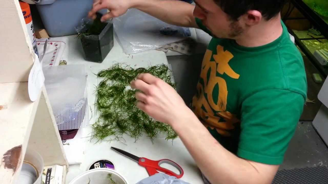 1 Diy Java Moss Wall Or Carpet Youtube