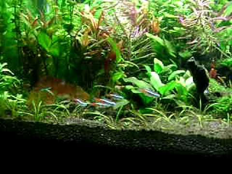 my aqua garden YouTube