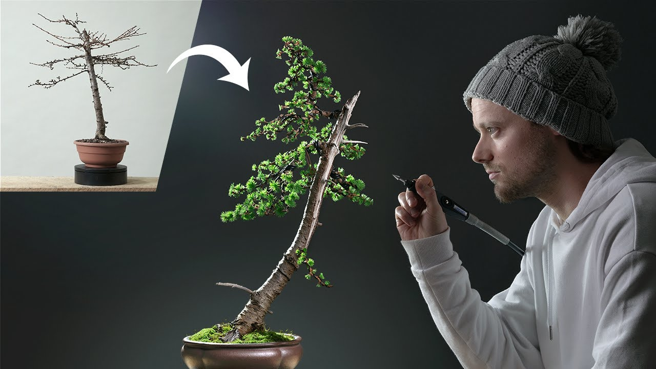 The Art of Creating a Bonsai: One Year Condensed Condensed Into 22 Mesmerizing Minutes