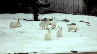 8 Rabbits B