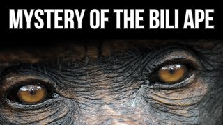 The Mystery of the Bili Ape