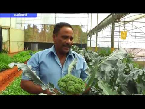 Broccoli Farming Idukki