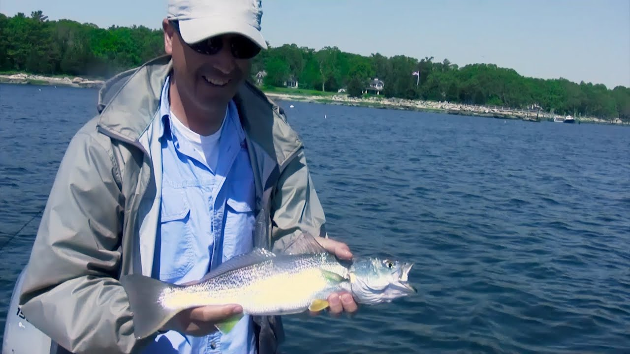 Saltwater fishing tips for bluefish and weakfish jigging for Blue saltwater fish