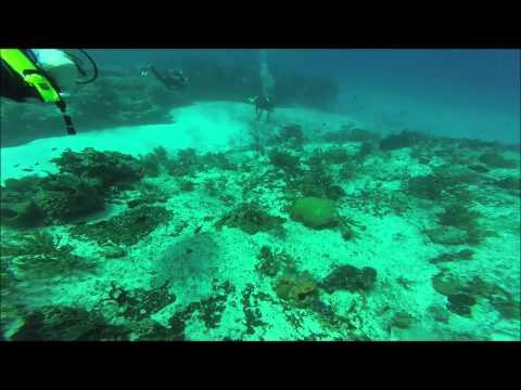 GoPro Cozumel Drift Dive
