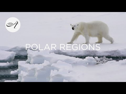 Audley Presents The Polar Regions