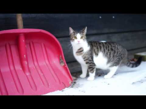 Cats first time on the snow 4k UHD 🐈 🐱
