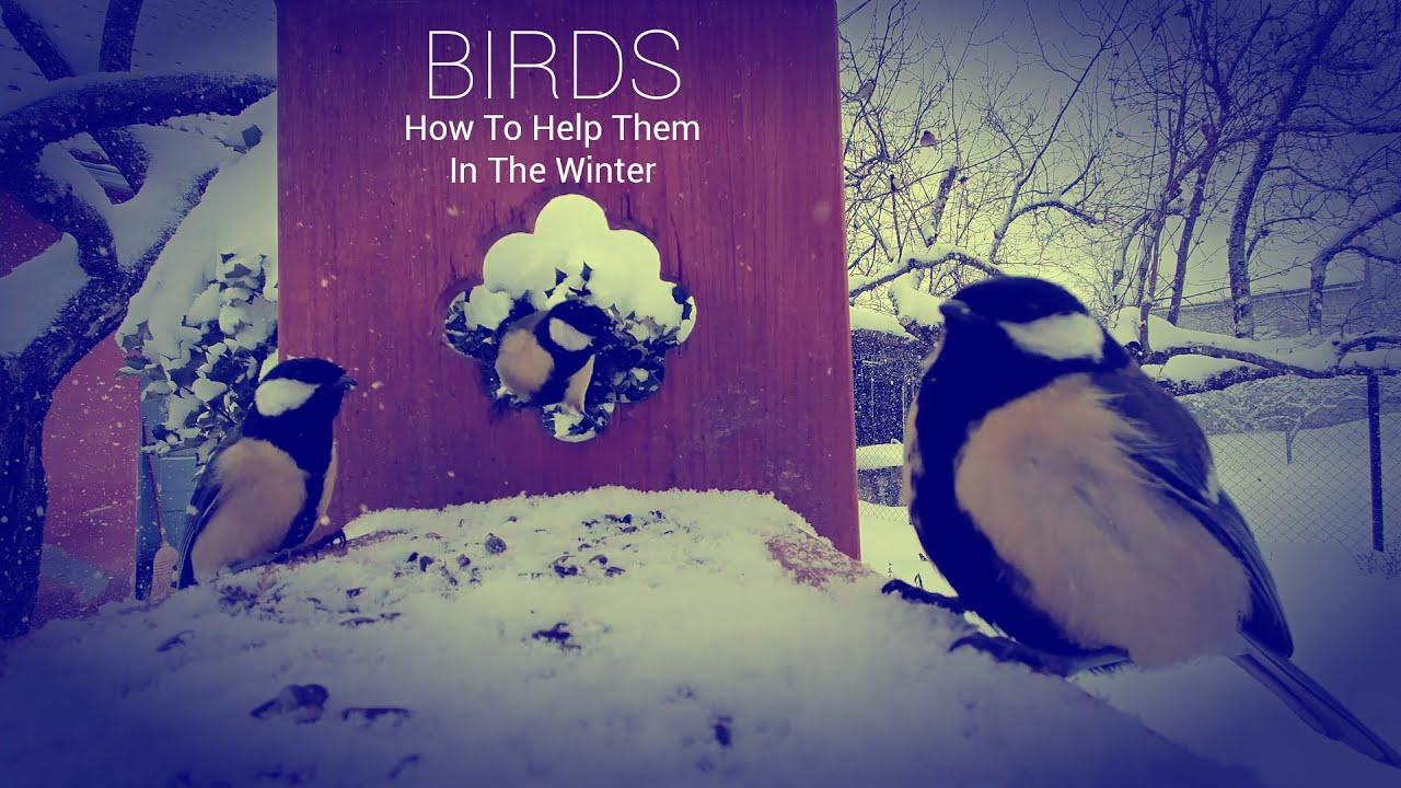 PTICE-Kako Im Pomoći U Zimskim Mjesecima_BIRDS-How To Help Them In The Winter