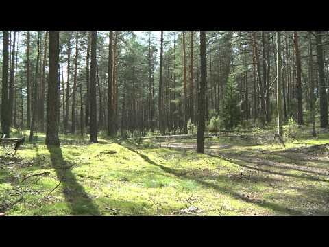 Dzūkijos nacionalinio parko gamta