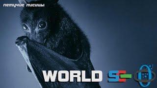 видео Летучие мыши