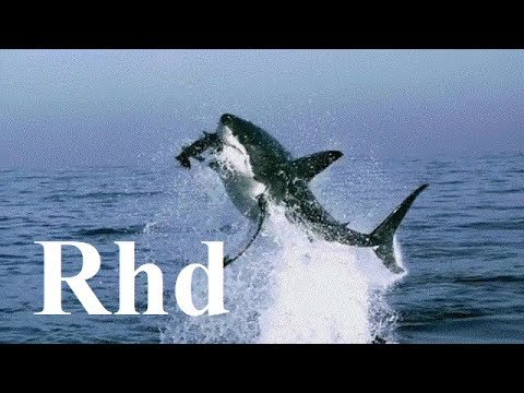Sharks, jaws, Great white. The Big Five  2018 HD Documentary.