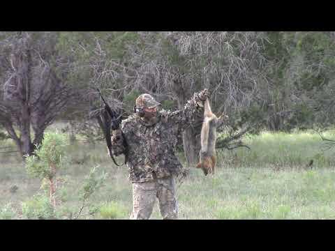 Northern AZ Predator Hunt 8-24-19