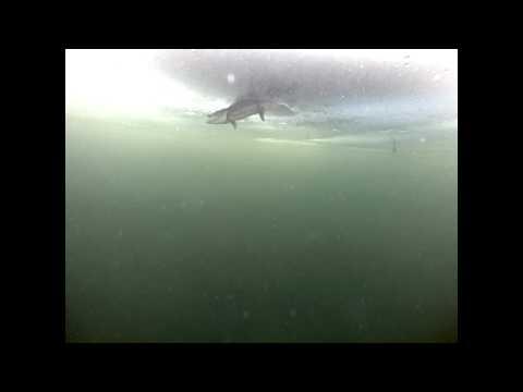 Lac du Flambeau Ojibwe Musky Ice Spearing