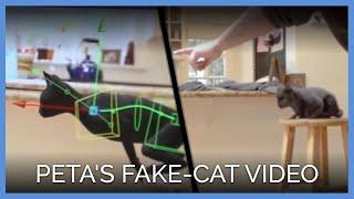 Why Did PETA Make a Fake-Cat Video?
