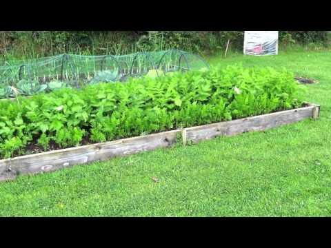 Raised Bed Veggies, Ireland