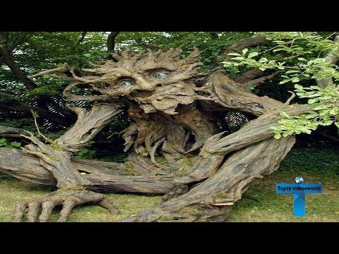 Oldest Trees in the World - World's Top 10  Oldest Trees