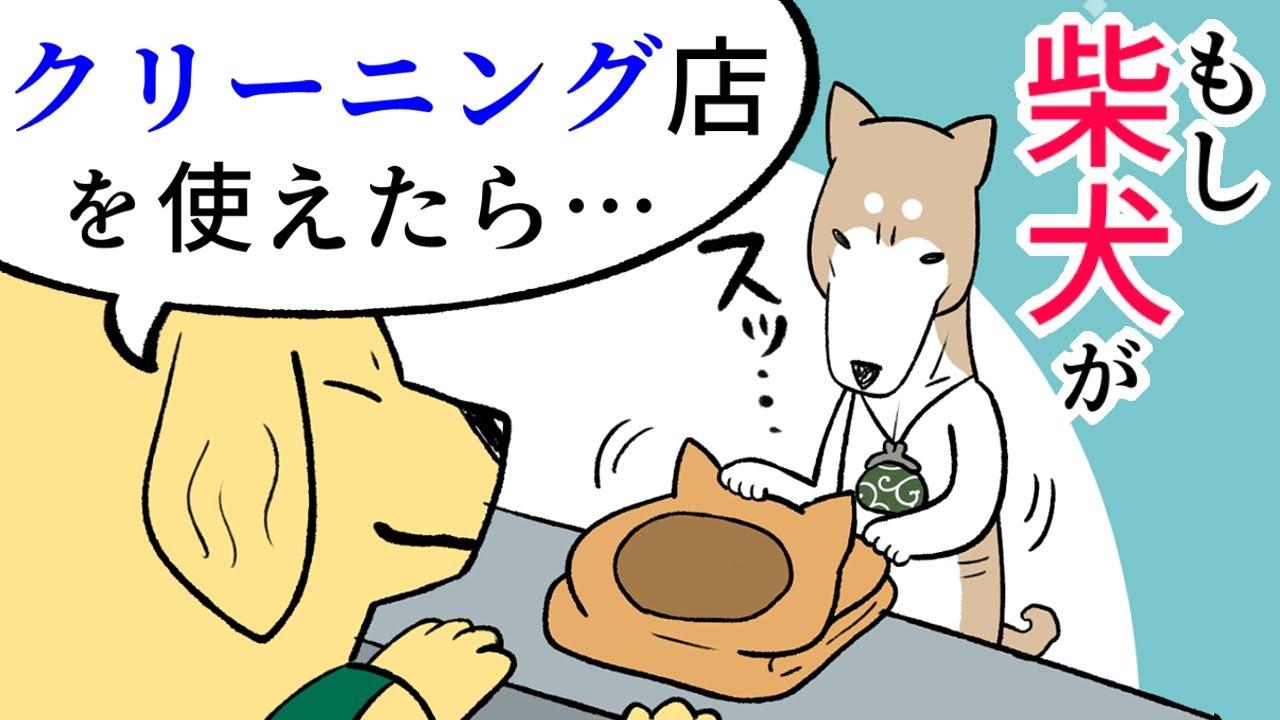 【犬まんが】もし柴犬が『クリーニング店』を換毛期に使えたら?