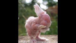 Облысение у кроликов. Разбираемся в причинах.