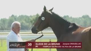Grand Show Anglo 2016 : Lot 30 - ELEOS DE LA BRUNIE