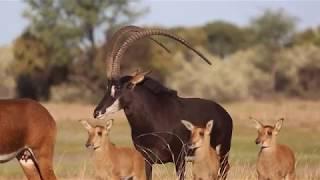 Valley Venture 2020 Wildlife auction