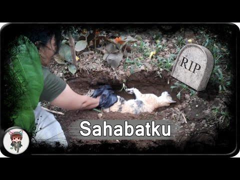 RIP - Selamat Jalan Dede Kucing Lucu Sahabatku