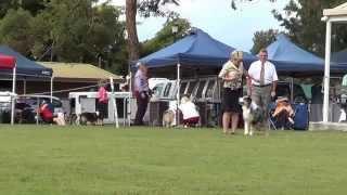 Best In Show - Qld Aussie Specialty 2013