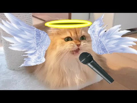 Cat singing with an angelic voice!![Original Video]