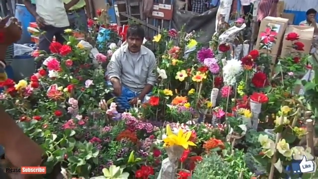 2018 Beautiful Rose Plant Market At Galiff Street In Kolkata Nursery Plants